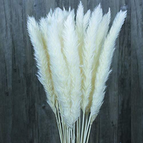 Color Life 25-30 Pcs Dried Pampas Grass,Phragmites Communis,Wedding Flower Bunch, for Home Decor,24