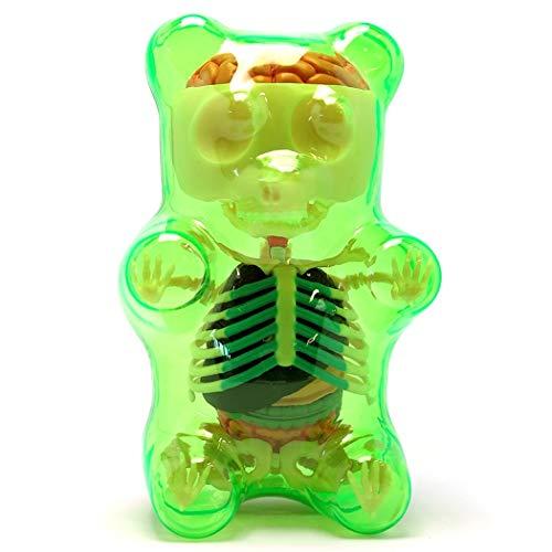 4D Master Green Gummi Gummy Bear Anatomy Model Kit by Jason Freeny