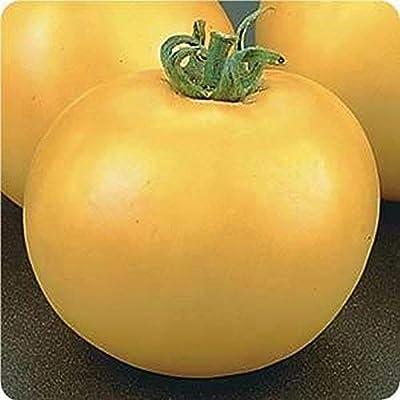 Lemon Boy Tomato F1 Hybrid Seeds (20 Seed Pack) : Garden & Outdoor