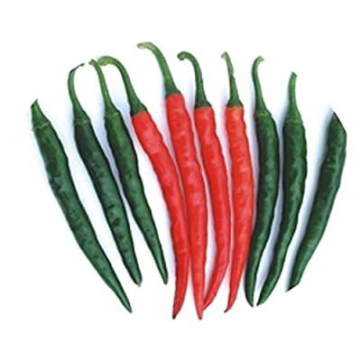 Tejaswini MHP-1 (Indian Sub-Continent) Pepper Seeds F1 (20 Seed Pack) : Garden & Outdoor