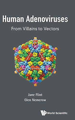 Human Adenoviruses: From Villains to Vectors