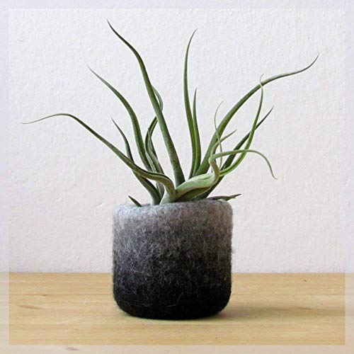 Felt vase/cactus vase/modern planter/Ombre Grey/home decor
