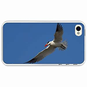 iPhone 4 4S Black Hardshell Case seagull sky flight Transparent Desin Images Protector Back Cover