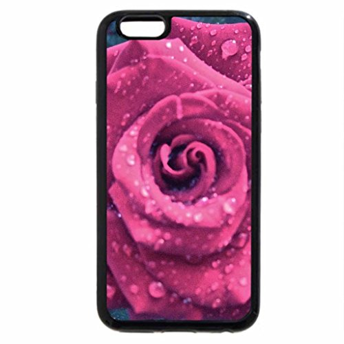 iPhone 6S / iPhone 6 Case (Black) A beautiful pink rose with rain drops on it..