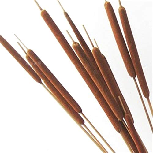 Dongliflower 20 Pieces Dried Natural Cattails Jumbo 20-24