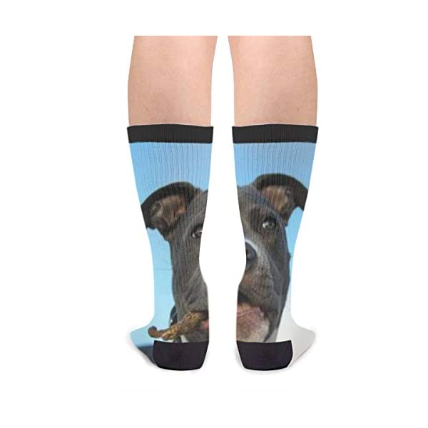 American Pit Bull Terrier Puppy Men's Women's Cool Novelty Crew Socks Unisex Casual Funny Crazy Dress Socks 2