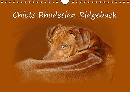 Read Online Chiots Rhodesian Ridgeback 2016: Photographies de chiots de Rhodesian Ridgebacks en Afrique du Sud. (Calvendo Animaux) (French Edition) ebook