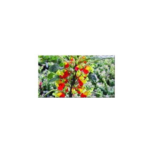 Garden Flowers Ready To Plant: Amazon.co.uk
