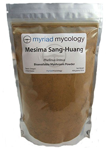 Mesima Mushroom (Sang Huang) Powder 1 lb Review