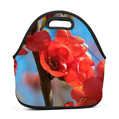 Neoprene Lunch Bag Insulated Lunch Tote Bags Boxes for Adults Men Women Nurses by ZFOOD bill quince-QW4148140