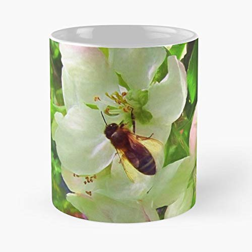 Moneypenny Missmoneypenny Lanes Prince Albert Apple Blossom - Funny Sophisticated Design Great Gifts -11 Oz Coffee Mug.the Best Gift For Holidays.