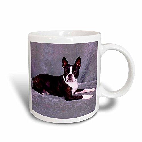 - 3dRose Boston Terrier Magic Transforming Mug, 11-ounce