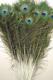 Flow Ki Peacock Mor Pankh Eye Feathers Tails, Pack of 25