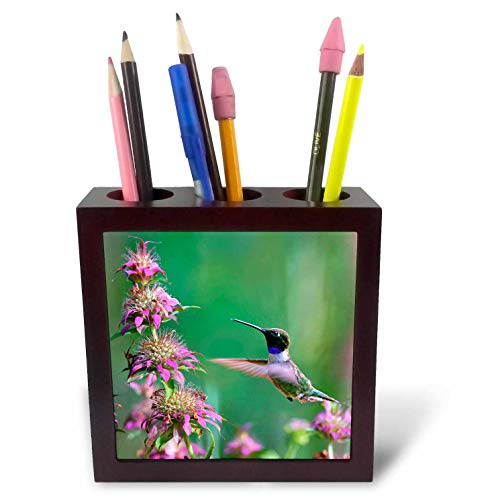 - 3dRose Danita Delimont - Hummingbirds - Black-chinned Hummingbird Male at bee Balm, Texas, USA.  - 5 inch Tile Pen Holder (ph_315064_1)