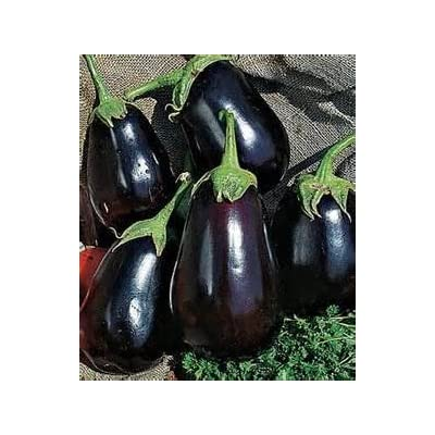 OrOlam Eggplant Black Beauty Organic 250 Seeds Heirloom Seeds (Solanum Melongena) : Garden & Outdoor