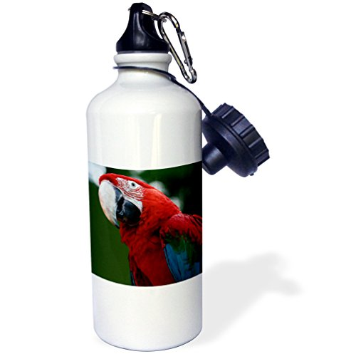 3dRose wb_46670_1 Macaw-Ara Chloropterus, Beak, Bird, Feather, Green Macaw, Green Winged Macaw, Macaw Sports Water Bottle, 21 oz, White