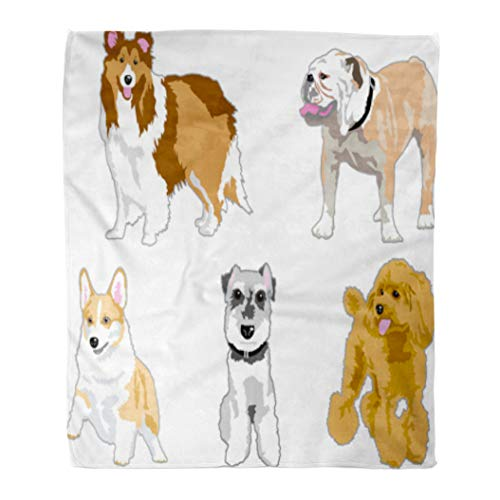 Golee Throw Blanket Brown Corgi of The Dog Gray Poodle Schnauzer Cartoon Mini 50x60 Inches Warm Fuzzy Soft Blanket for Bed ()