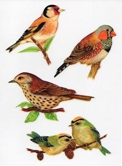 Bird Window Stickers Amazoncouk Kitchen Home - Bird window stickers amazon