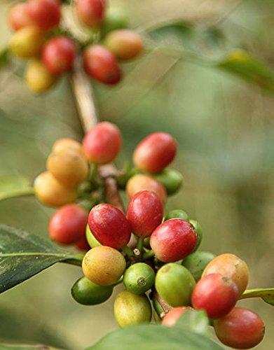100% Kona Coffee Espresso Roast - 5 Pounds Premium Gourmet Whole Bean by Mountain Thunder Coffee Plantation by Mountain Thunder (Image #4)