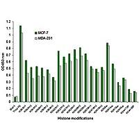 Epigentek - EpiQuik Histone H3 Modification Multiplex Assay Kit (Colorimetric)new product - 96 Assays