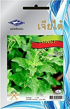 Holy Basil, Tulsi (Ocimum sanctum) Package of 2400 Seeds From Chia Tai, - Seeds Basil Holy