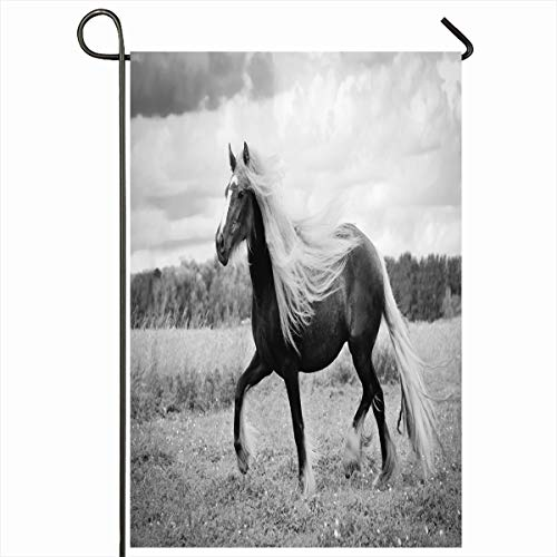 (Ahawoso Seasonal Garden Flag 12x18 Inches Power Brown Irish Cob Horse Nature Equine Green Domestic Energy Equestrian Farm Design Home Decorative Outdoor Double Sided House Yard)