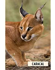 Caracal: Composition Notebook For Caracal Lovers , Caracal Lined Journal ,6x9 Inches , 110 Pages ,Caracal Diary