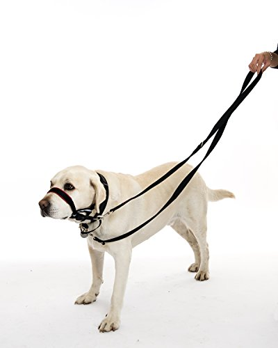 Musical Instruments That Makes Dogs Bark
