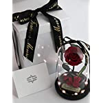 Rose-in-Glass-Dome-with-Metal-Engraved-Plaque-inspired-by-Beauty-and-the-Beast-Rose-Real-Preserved-Red-Rose-in-Large-Glass-Dome-with-LED-lights