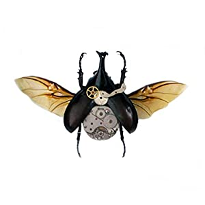 Real Steampunk Rhino Beetle Insect Taxidermy Display Shadow Box