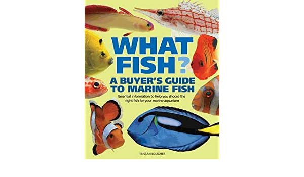 BarronS Publishing Buyers Guide To Marine Fish