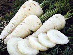 Lunar White Carrot 100 Seeds - Tender,Coreless,Sweet