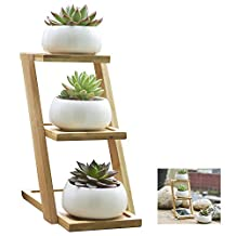 Succulent Planters,Y&M(TM)White Ceramic Planter,Set of 3 Mini Succulent Flower Pots with Bamboo Tray