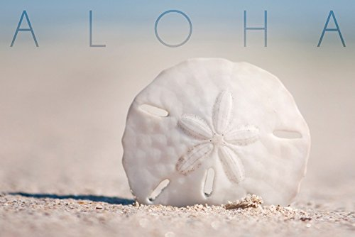 41pjMaCr9LL The Best Sand Dollar Artwork You Can Buy