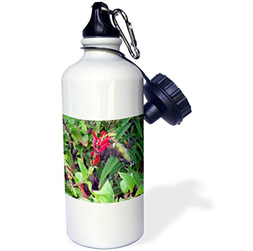 - 3dRose wb_33112_1 Bee Balm and Hummingbird Sports Water Bottle, 21 oz, White