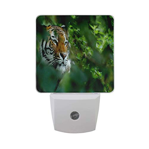 (Customized 2 Pack Plug-in LED Night Light, Smart Dusk to Dwn Sensor, Auto ON/Off Nite Light for Bedroom Bathroom Hallway Kitchen Stairs Kids Nursery, Tiger Leaf Camouflage)