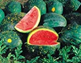 Organic Moon & Stars Watermelon 35 Seeds