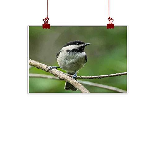 duommhome Abstract Painting Black- Capped Chickadee Decorative Painted Sofa Background Wall 35