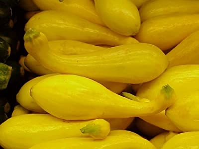 50+ Crookneck Heirloom Squash Seeds for 2017