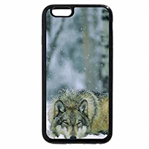 iPhone 6S Plus Case, iPhone 6 Plus Case, napping wolf