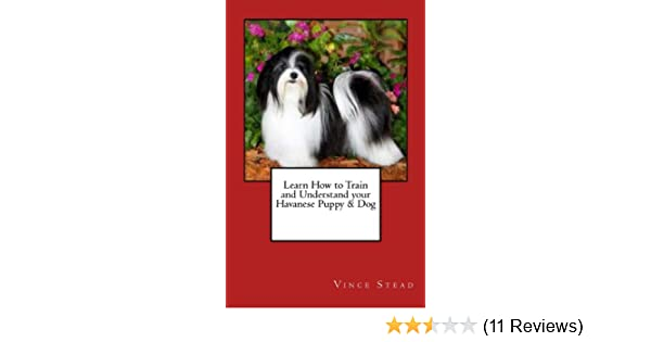Learn How To Train And Understand Your Havanese Puppy Dog Vince