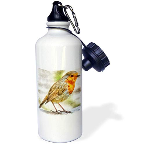 (3dRose Taiche - Acrylic Painting - Robin - Christmas Robin Winter Watercolor - 21 oz Sports Water Bottle (wb_298276_1))