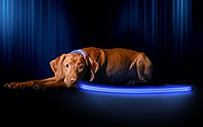 LED Dog Leash - Easily Seen At Night