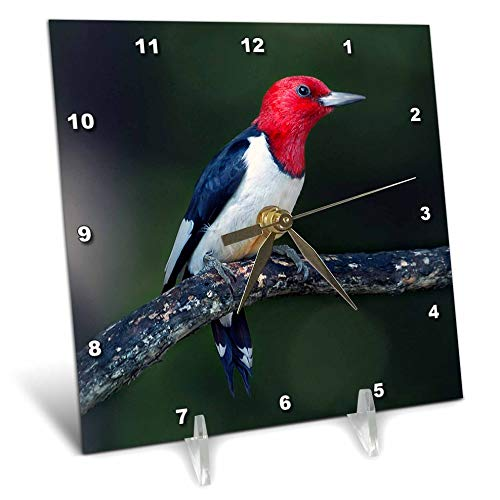 3dRose Stamp City - Birds - A red-Headed Woodpecker on The Branch of a Tree Posing for The Camera. - 6x6 Desk Clock (dc_290777_1)