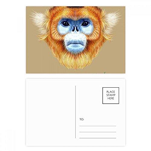 nkey Animal Postcard Set Birthday Thanks Card Mailing Side 20pcs ()