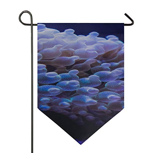 Anemone Bubble - Garden Flags Large Bubble Tip Anemone Decorative Double Sided Polyester 12 X 18.5 Inch Hot Garden Flag