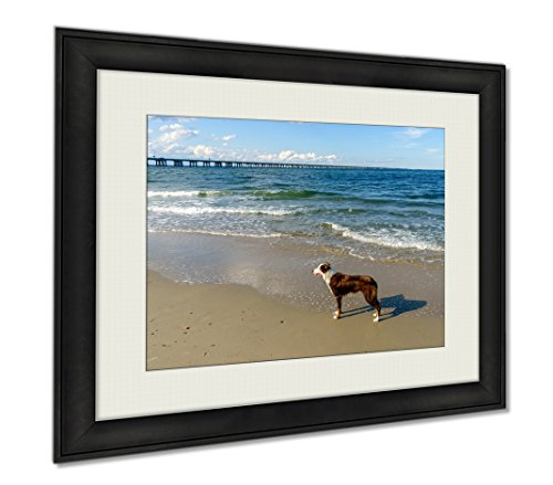 Ashley Framed Prints Border Collie At The Beach, Wall Art Home Decoration, Color, 34x40 (frame size), AG5458717 by Ashley Framed Prints