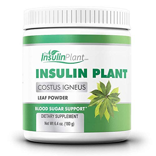 Insulin Plant Leaf Powder (Costus Igneus) - Blood Sugar Support - 180g (2 Month Supply) - TheInsulinPlant.com