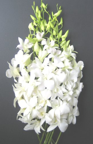 Fresh Flowers   Just Orchids White Dendrobium