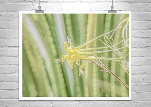 (Columbine Flower Art, Yellow Flower Picture, Green Agave, Columbine Picture)